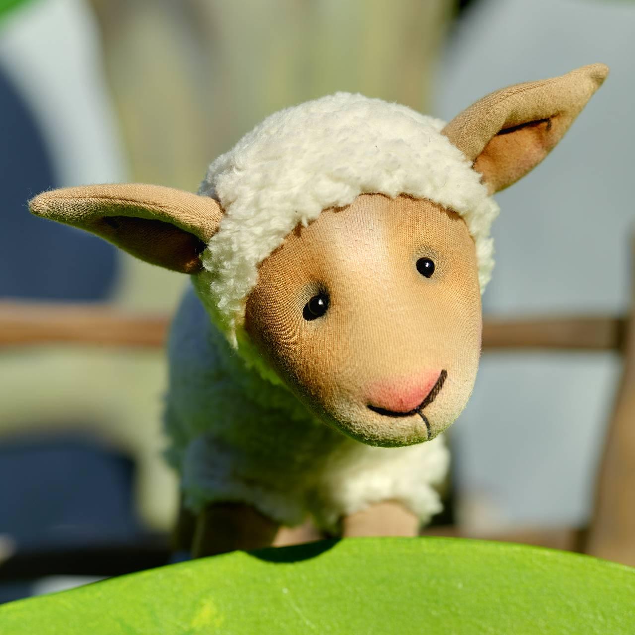 Die Complizen: Das Schaf Charlotte und seine Freunde